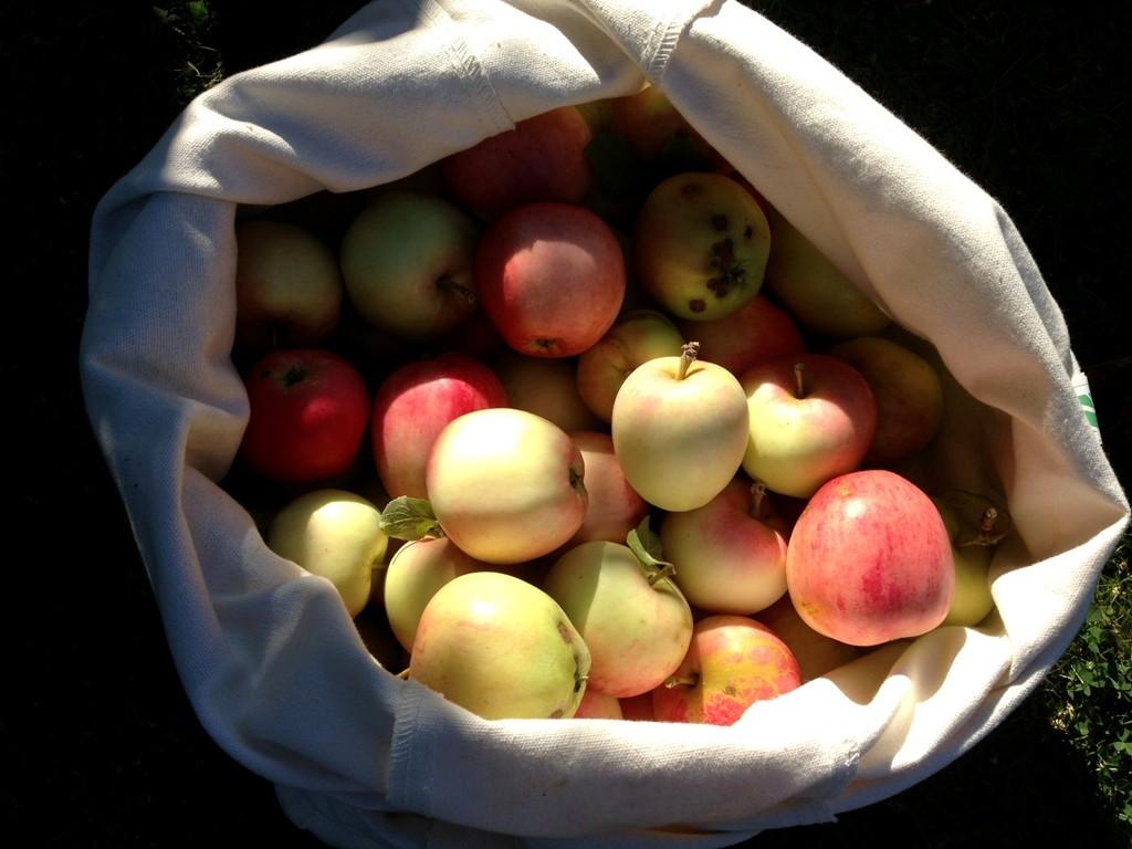 Æbleklatter