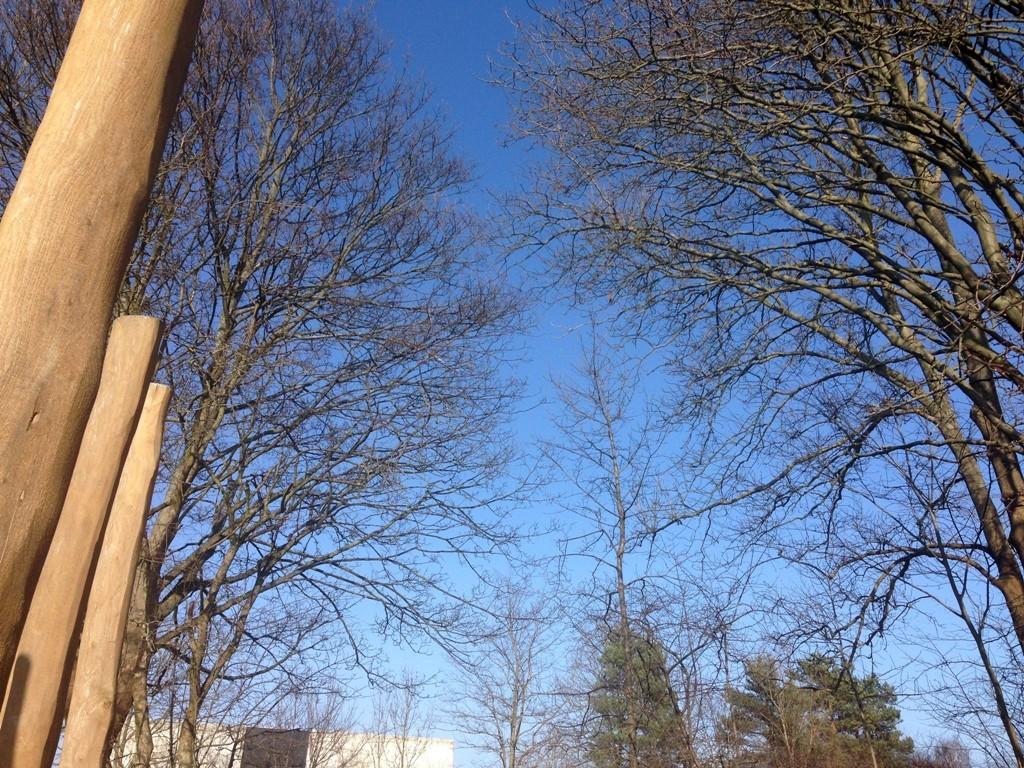 Trælegepladsen i Brønshøj