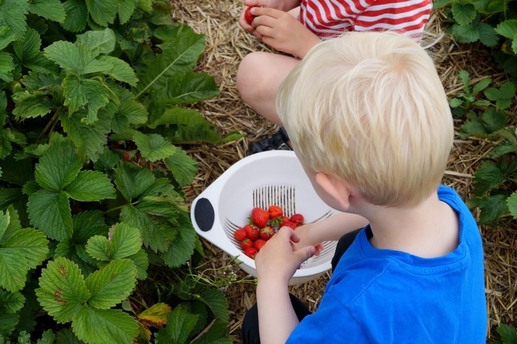 Jordbærgården - plukselv