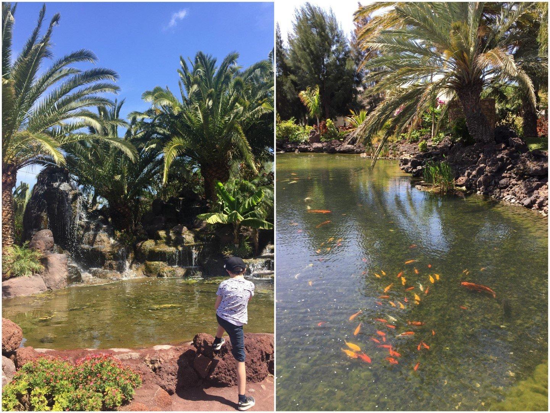 Oasis Park - Fuerteventura